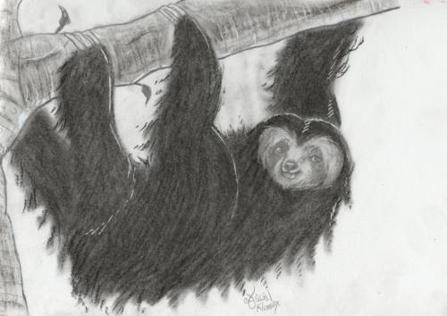 Sloth Commission